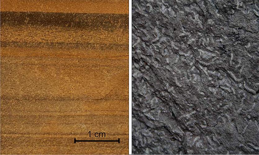 Figure 3 Trace Fossils In Fine Grained Turbidites